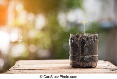 很少, 概念, 保留, 自然, 地板, 植物, 塑料, 環境, 木頭, 瓶子, 世界, 污染