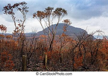 後で, ブッシュ, オーストラリア, 火