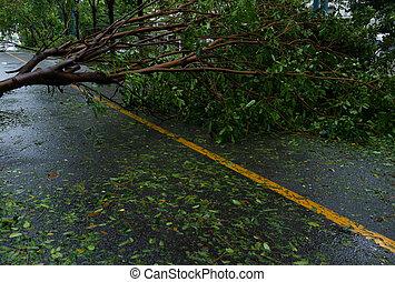 後で, 木, 下方に, 壊される, 落ちた, によって, 嵐, went, 強い, 道