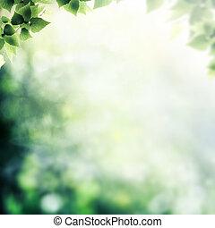 後で, ∥, rain., 美しさ, 霧が濃い日, 中に, ∥, 森林, 抽象的, 自然, 背景