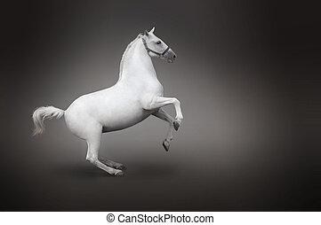 後ろ足で立つ, 馬, 隔離された, 白