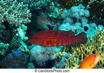 後面的珊瑚
