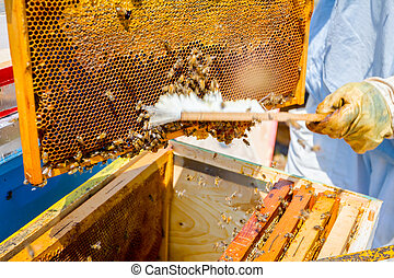 得なさい, 養蜂家, 蜂, 剛毛, 使うこと, rid