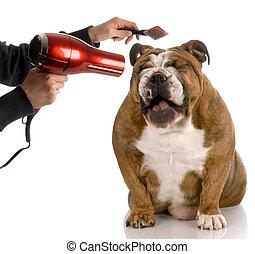 得ること, ブルドッグ, -, 犬, 手入れをされる, ある, 間, 笑い, 英語, ブラシをかけられる