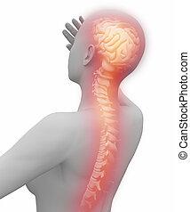 從, 腦子, 到, 脊椎, 痛苦