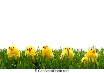 復活節, 小雞