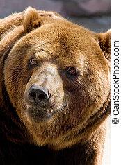 微笑, 熊