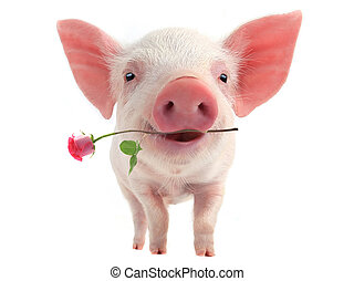 微笑, 豬