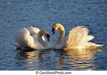 心, 上げられた, 白鳥, 翼, 作成
