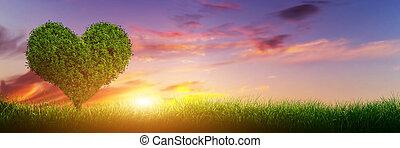 心, 全景, banner., 爱, 树, 领域, 形状, 草, sunset.