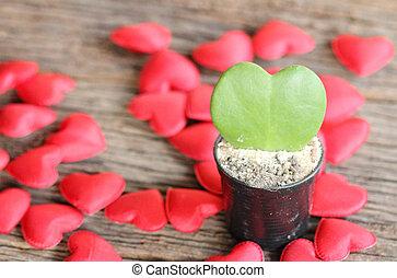 心, 花, 葉, ポット, 形, 緑の赤