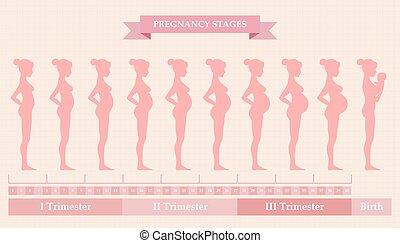 怀孕的婦女, -, 首先, 第二, 以及, 第三個三學期一年中的一個學期