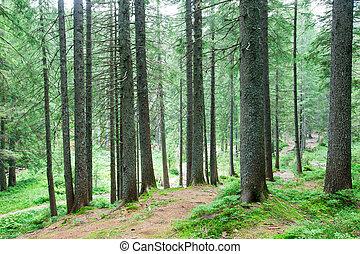 性质, 树。, 背景, 阳光, 树木, 绿色的森林