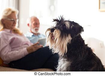 恋人, シニア, 犬, 家