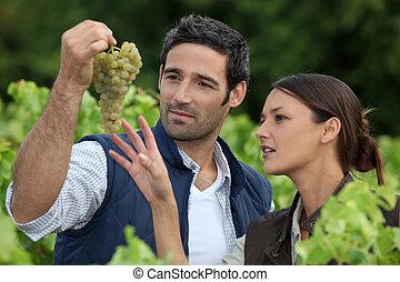恋人, 栽培者, ワイン