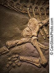 恐竜, 化石