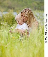 息子, 母, 牧草地, タンポポ