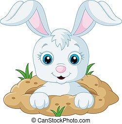 愉快, bunny, 卡通, 在, the, 洞