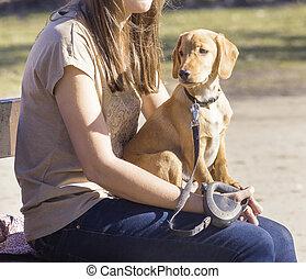 愛玩用小犬, モデル