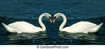 愛, 白鳥