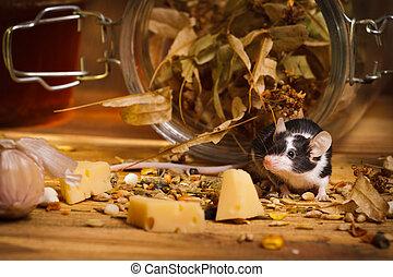 感受, 乳酪, 老鼠, 地下室