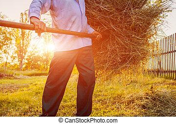 懸命に, work., countryside., 干し草用フォーク, 干し草, ギャザー, 日没, 農夫, close-up., 年長 人