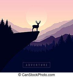 懸崖, 冒險, 荒野, 麋, 傍晚, 野生動物