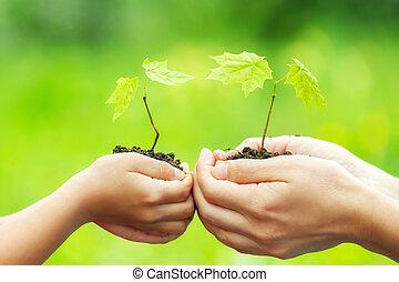 成人, そして, 子供, 保有物, わずかしか, 緑のプラント, 中に, 手