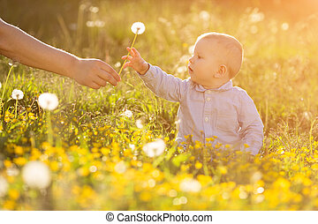 成人, 手, 手掛かり, 赤ん坊, タンポポ, ∥において∥, 日没, 子供, モデル, 中に, a, 牧草地, 日なたで, ∥, 子供, 中に, ∥, 牧草地, 概念, 上に, ∥, 主題, の, 子供, 保護, アレルギー, へ, 花粉, の, 花, アレルギー, バックライトを当てられる, 太陽ライト, 秋, 白熱, 太陽, 日光, 勉強, 新しい, 教育