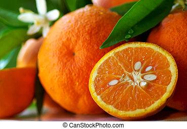 成長した, オレンジ, そして, flowers.