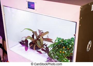 成長しなさい, 植物, 箱, 光合性