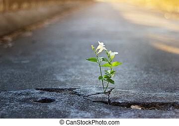 成長する, フォーカス, テキスト, ブランク, 白, ひび, 柔らかい, 通り, 花