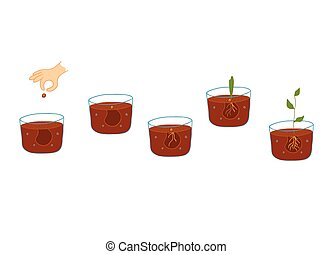 成長する, プロセス, 植物