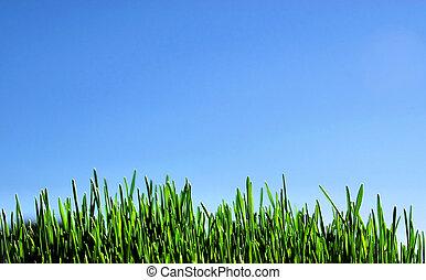 成長する, 小麦