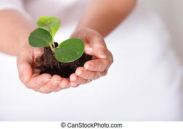 成長する, 打撃, シュート, 隔離された, 持たれた, 山, 新たに, 小さい, 地球, hands.