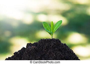 成長する, 木, ∥あるいは∥, 地面, 植物, 若い
