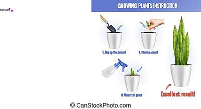 成長する, 植物, infographics, 構成, 現実的, 家