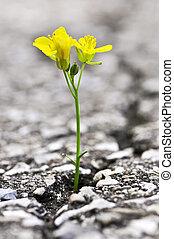 成長する, 花, アスファルト, ひび