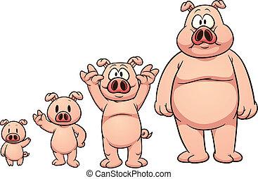 成長する, 豚