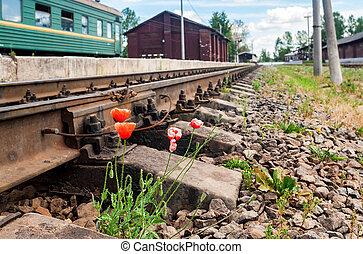 成長する, 鉄道, ケシ, 赤, 次に
