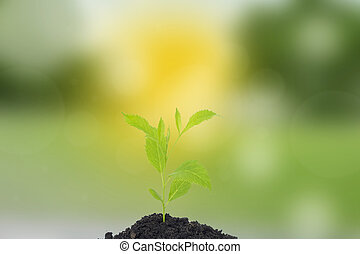 成長, ......的, 新的生活