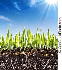 成長, 背景, -, 土壌, 概念