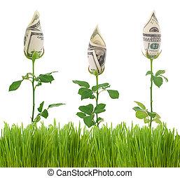 成長, 財政