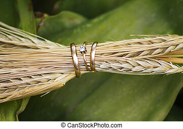 戒指, 特寫鏡頭, 耳朵, 小麥, 婚禮