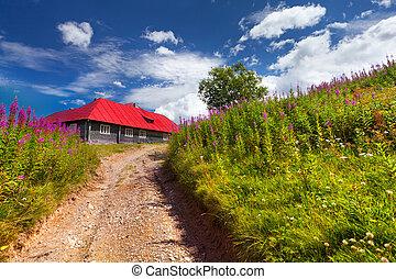 房子, 带, 红, 屋顶, 在中, a, 花的领域