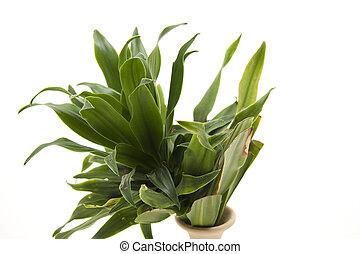 房間, 綠色, 植物