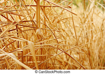 手ざわり, の上, 背景, 草, 乾きなさい, 終わり