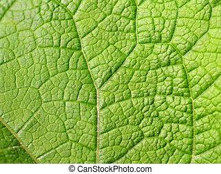 手ざわり, の, 緑の葉