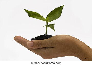手の 保有物, 実生植物