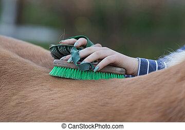 手入れをすること, 女の子, 馬